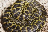 Anaconda removed from toilet at Virginia apartment complex