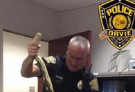 11-foot python found hiding in car outside Florida home