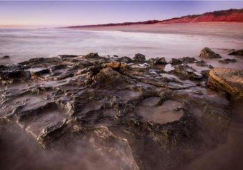 Diverse array of dinosaur tracks mark Australia's 'Jurassic Park'