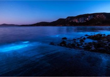 Tasmanian coast glows blue with bioluminescent algae