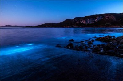 Tasmanian coast glows blue with bioluminescent algae