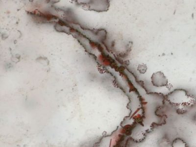 Scientists discover 'world's oldest fossils'