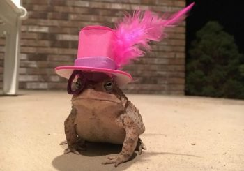 Alabama man classes out porch-dwelling toad with tiny hats
