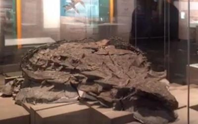 World's best-preserved armored dinosaur fossil on display in Canada
