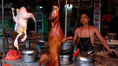China's Yulin festival: Doubts over 'dog meat ban'