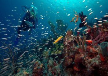 Coral gardening is a boon to Caribbean reefs