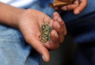 Synthetic cannabis linked to eighth New Zealand death