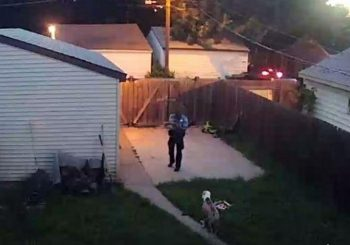 Video shows Minneapolis cop shooting two dogs