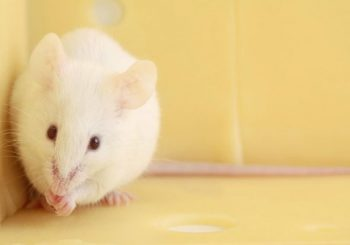 Study: Drug reverses memory failure in brain injury patients