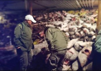 Chinese fishermen get up to 4 years prison for illegally fishing sharks in Ecuador