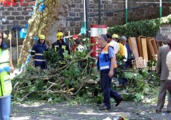Falling tree kills 13 on Portuguese island of Madeira